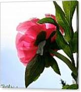 Blossom Bottom Canvas Print