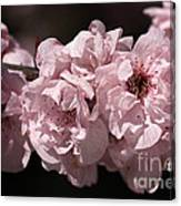 Blossom In Pink Canvas Print