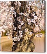 Blossom Ponytails Canvas Print