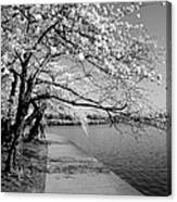 Blossoms In Bw Canvas Print