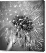 Blowball   Canvas Print