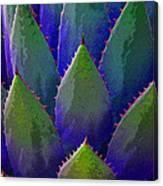 Blue Agave Canvas Print