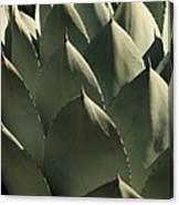 Blue Aloe Canvas Print