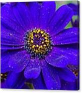 Blue And Bright Canvas Print