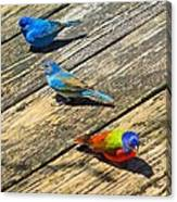 Blue And Indigo Buntings - Three Little Buntings Canvas Print