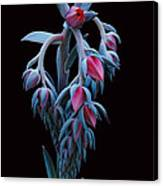 Blue And Pink Succulent Canvas Print