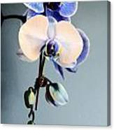 Blue And White Orchids Canvas Print