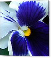 Blue And White Pansy Canvas Print
