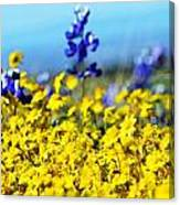 Blue And Yellow Wildflowers Canvas Print