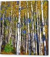 Blue Aspen On Grand Mesa Canvas Print