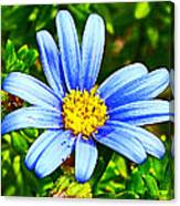 Blue Aster In Park Sierra Near Coarsegold-california   Canvas Print