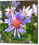 Blue Asters 3 Canvas Print