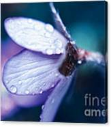 Blue Beauty In The Morning Canvas Print