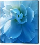 Blue Begonia Flower Canvas Print