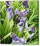 Blue Bell Canvas Print