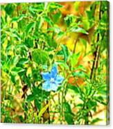 Blue Belle Canvas Print