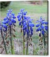 Blue Bells 1 Canvas Print