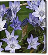 Blue Bells Canvas Print