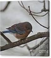 Blue Bird 201301 Canvas Print
