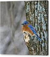 Blue Bird In Winter Canvas Print
