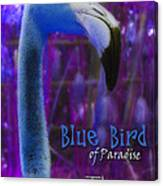 Blue Bird Of Paradise - The Fuzz Canvas Print