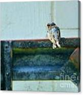 Blue Bird Side View Canvas Print