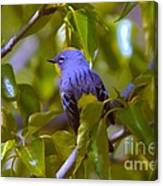 Blue Bird With A Yellow Throat Canvas Print