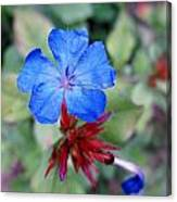 Blue Bloom Canvas Print