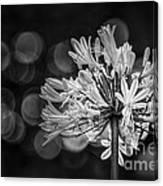 Blue Blooms B/w Canvas Print