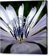 Blue Blossoms  3 Canvas Print