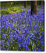 Blue Blue Bells Canvas Print