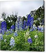 Blue Bonnet Carpet V9 Canvas Print
