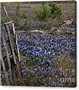Blue Bonnet Fence V2 Canvas Print