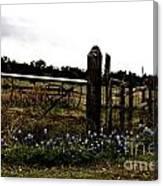 Blue Bonnet Fence V4 Canvas Print