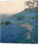 Blue Bonnet Field In San Antonio Canvas Print