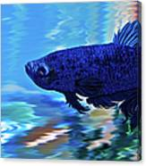 Blue Boy Canvas Print