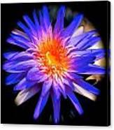Blue Burst Lily Canvas Print
