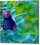 Blue Butterfly Fantasy Canvas Print