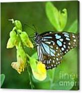 Blue Butterfly In The Green Garden Canvas Print