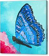 Blue Butterfly Canvas Print