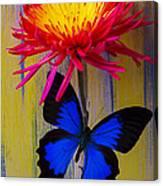 Blue Butterfly On Fire Mum Canvas Print