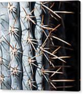Blue Cactus Canvas Print