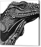 Blue Cayman Iguana Canvas Print