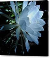 Blue Cereus Canvas Print