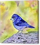 Blue Chaffinch Canvas Print