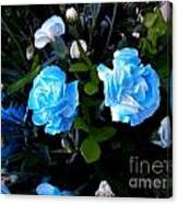 Blue Carnations Canvas Print