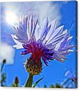 Blue Cornflower With Blue Sky Canvas Print