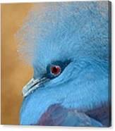 Blue Crowned Pigeon Canvas Print