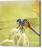 Blue Dasher Canvas Print