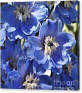 Blue Delphinium 9655 Canvas Print